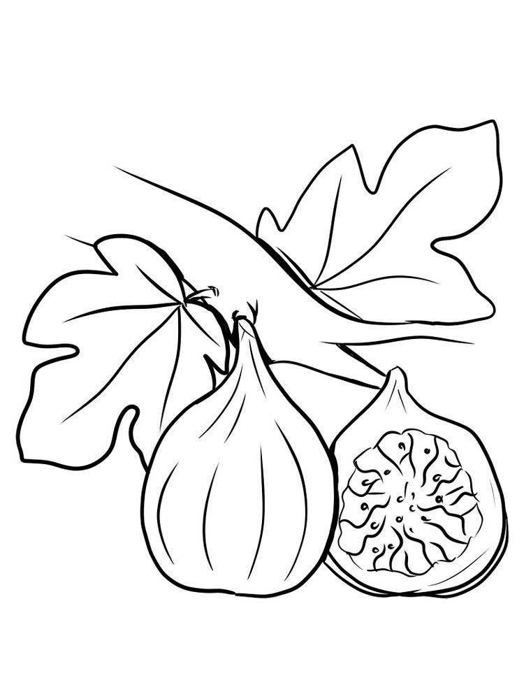 Fig Fruit Coloring Page Print Trabajo De Madera De Madera La