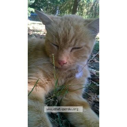 #197310 chat trouvé à CHéCY | chat-perdu