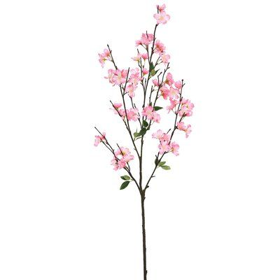 Linea Pink Cherry Blossom Single Stem Planting Flowers Nature Backgrounds Pretty Nature Pictures