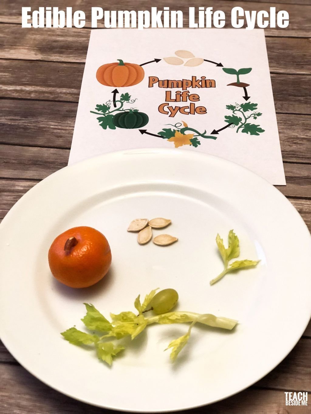 Awesome Pumpkin Life Cycle Activities