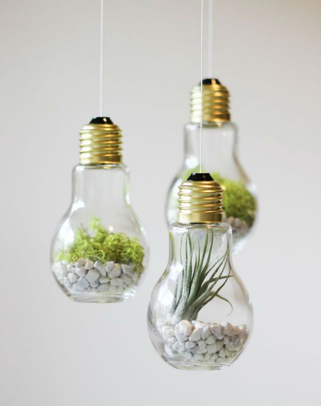 Diy Lightbulb Terrariums Made W Vases Air Plants Green Moss Rocks White String You Can Hang These Little Beauties From The Ceiling Or