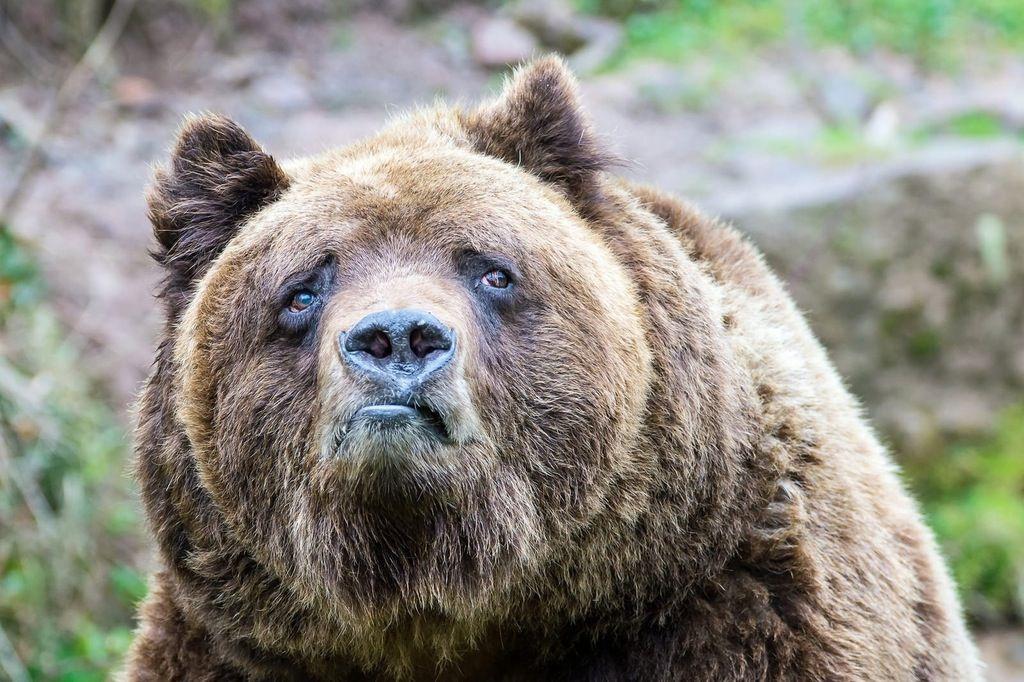 Sad Bear Meme Meaning