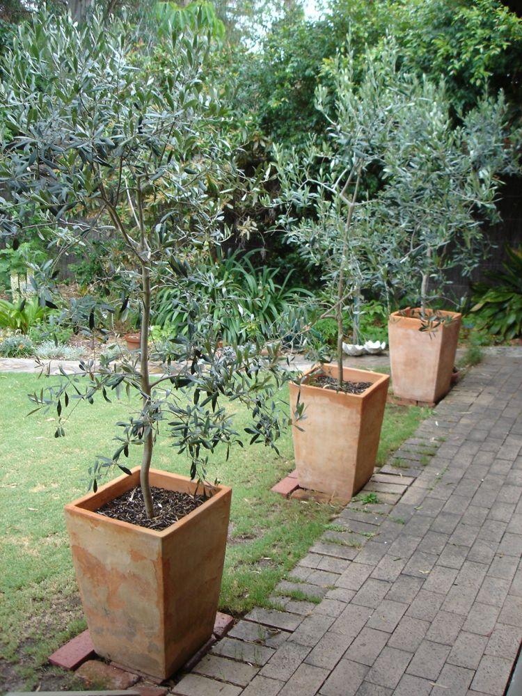les 25 meilleures id es de la cat gorie olivier en pot sur pinterest calcaire de patio douce. Black Bedroom Furniture Sets. Home Design Ideas
