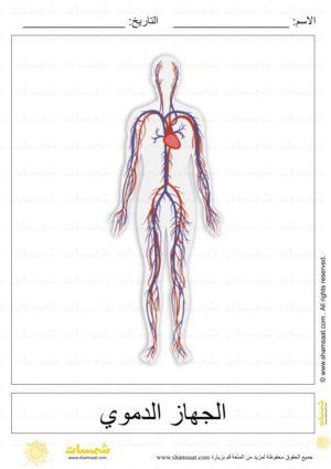 أجهزة جسم الانسان علوم للاطفال 1 Art Humanoid Sketch Image