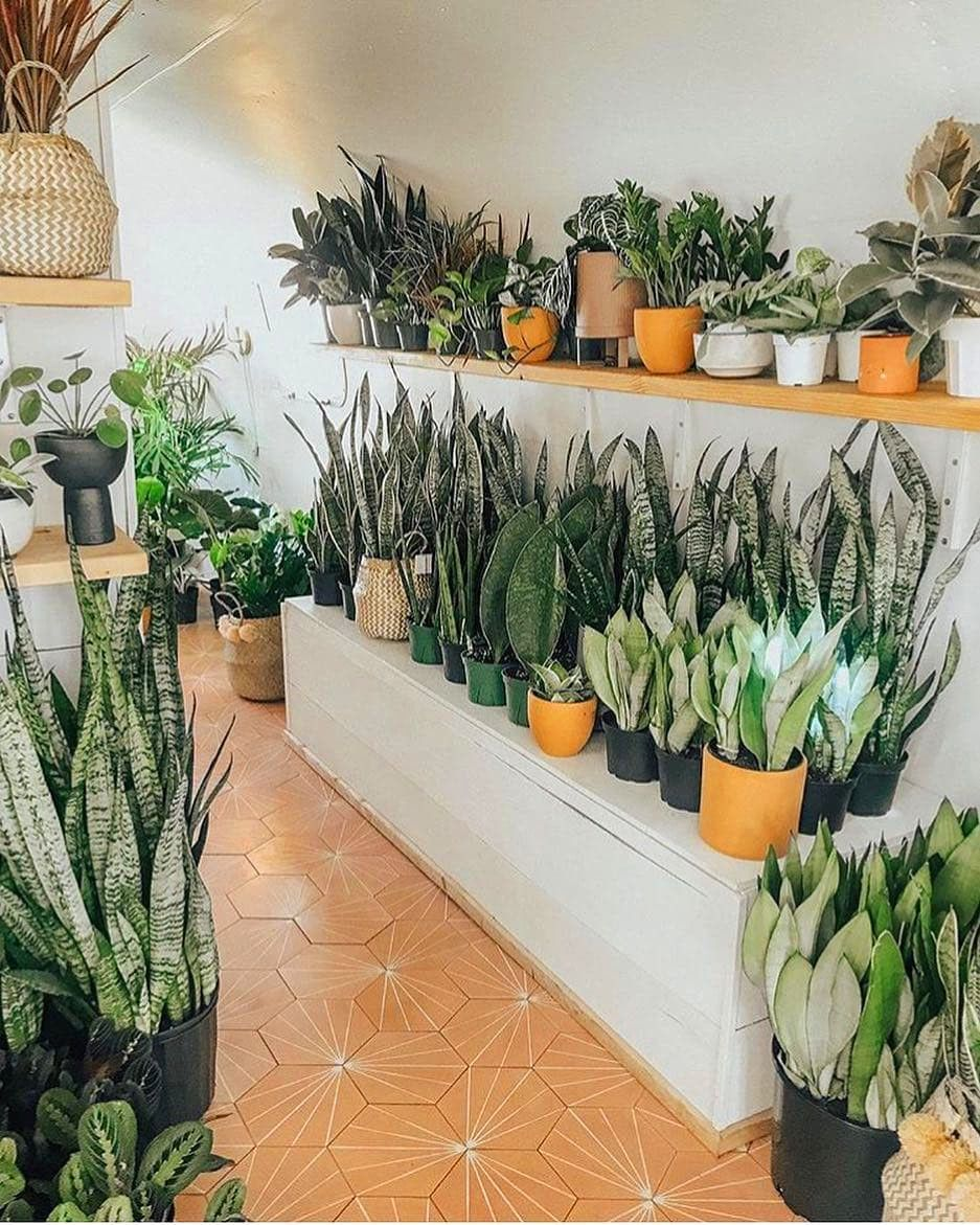 65 Indoor Garden Ideas You Will Fall For Plants Indoor Garden Plant Decor Indoor