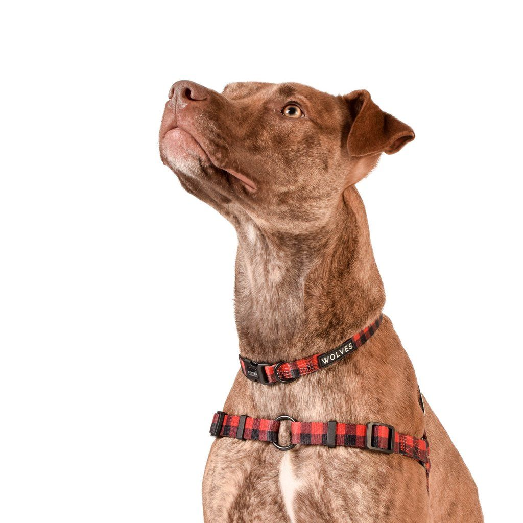 Buffalo frontclip harness dog harness dogs your dog
