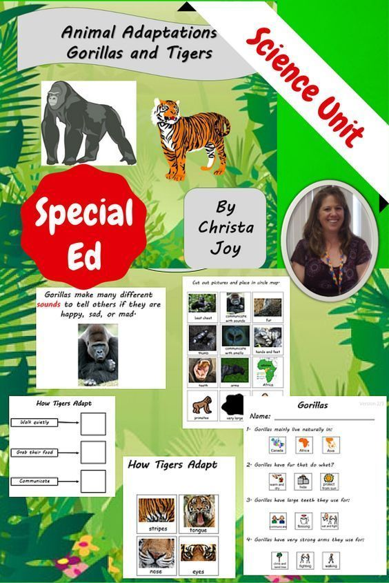 Intended for students with autism and special learning needs. Animal-Adaptations-for-Special-Education-Gorillas-and-Tigers  There are 75 pages that covers the adaptions gorillas and tigers have developed over the decades for survival. I found focusing on just 2 animals helped my students build a better foundation of how important adaptations are for animals to survive.  Download at…