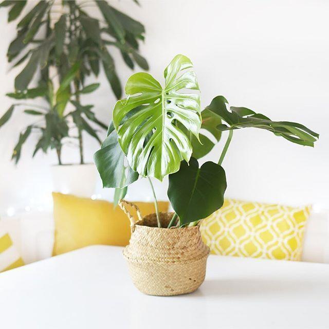 Die Besten Zimmerpflanzen Für Die Wohnung