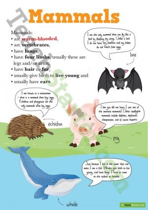 Animal Clifications Mammals Posters