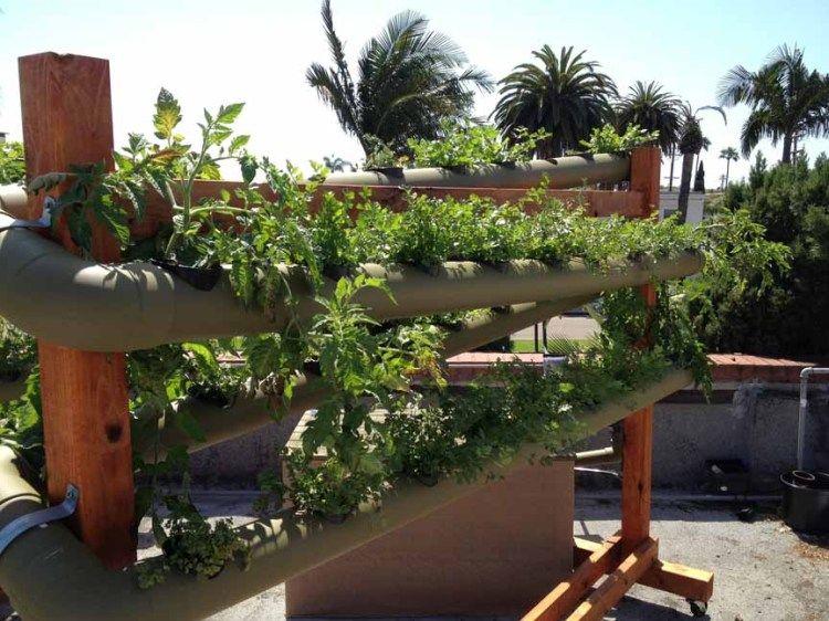 Coronado Brewing Company's Rooftop Garden - Coronado Island (eCoronado.com)