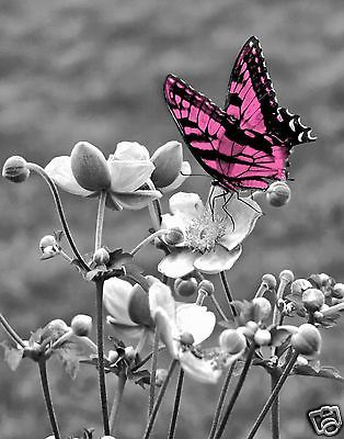 Black White Pink Butterfly Wall Art Home Decor Matted Picture | eBay