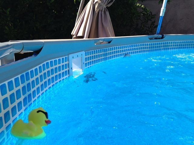 Adding a hayward thru the wall skimmer to intex metal - Hayward swimming pool ...