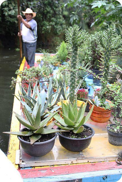 Bote con plantas de Xichimilco