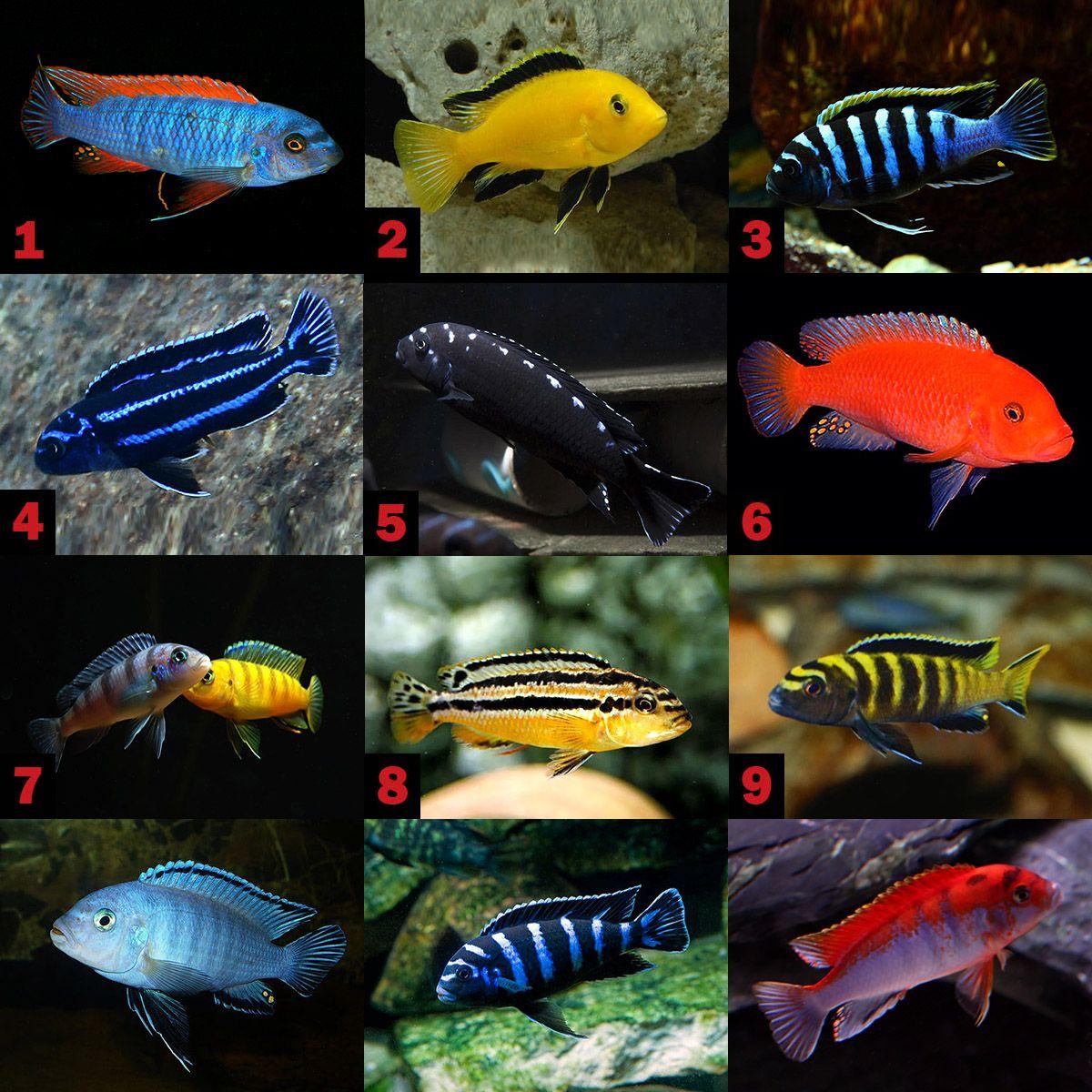 Виды рыбок для аквариума фото и название