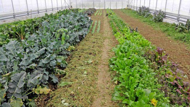 Aussaatplane Im Februar Bald Geht Es Richtig Los Gartenarbeit Pflanzen Garten