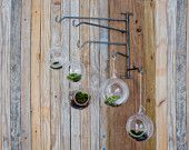 FIVE Handblown Glass Terrariums on Steel Swing Rack mobile hanger hook indoor terrarium garden votive holder
