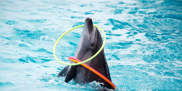 DMM: Retire Bucky, the Elderly Dolphin With Cancer Forced to Carry Tourists on His Back!