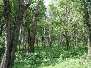 Quality and extent of Tamil Nadu forest area increased @ sanctuariesindia.com