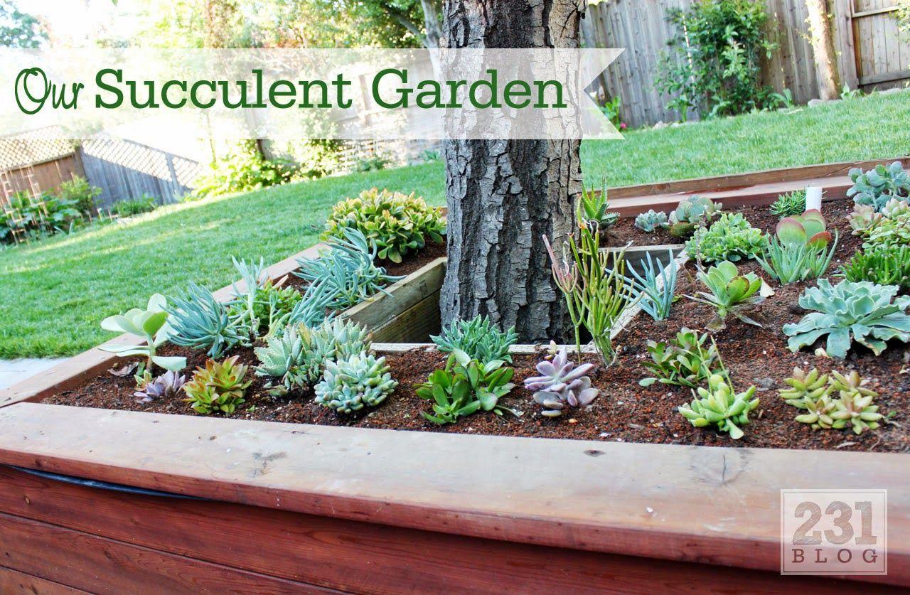 Raised succulent bed around tree Outdoor Extravaganza