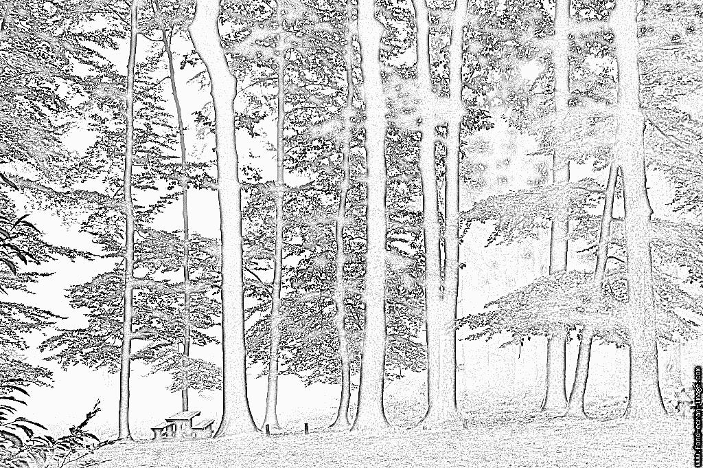 оригинален лес для раскрашивания самому испокон