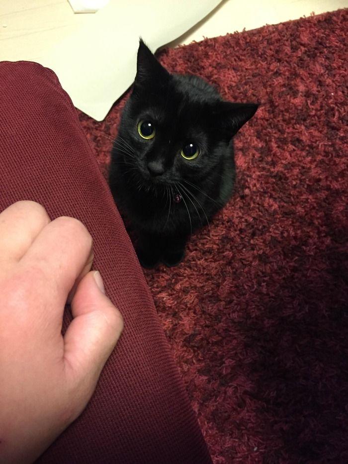 【悲報】ワイの黒猫、ひねくれる:ハムスター速報