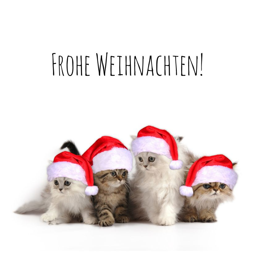 Süße Weihnachtskarte mit Kätzchen mit Weihnachtsmützen. Für große und kleine Katzenfans! (Für quadratische Karten fallen extra Portokosten an.)