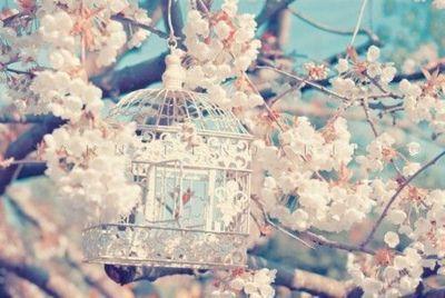 Pretty flowers tumblr pretty flowers beauty pinterest pretty flowers tumblr pretty flowers mightylinksfo