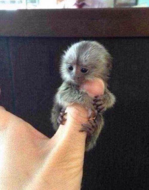 22 cutest baby animal photos