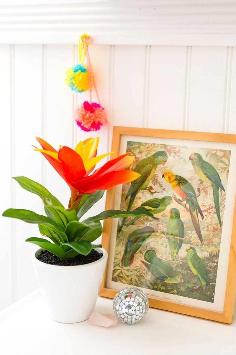 Save these indoor gardening tips to learn how to pick the best