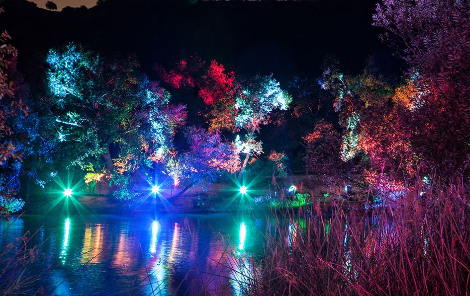 c9975d6f8b2aa974f5d48d8f3a562b22 - Enchanted Forest Of Lights At Descanso Gardens