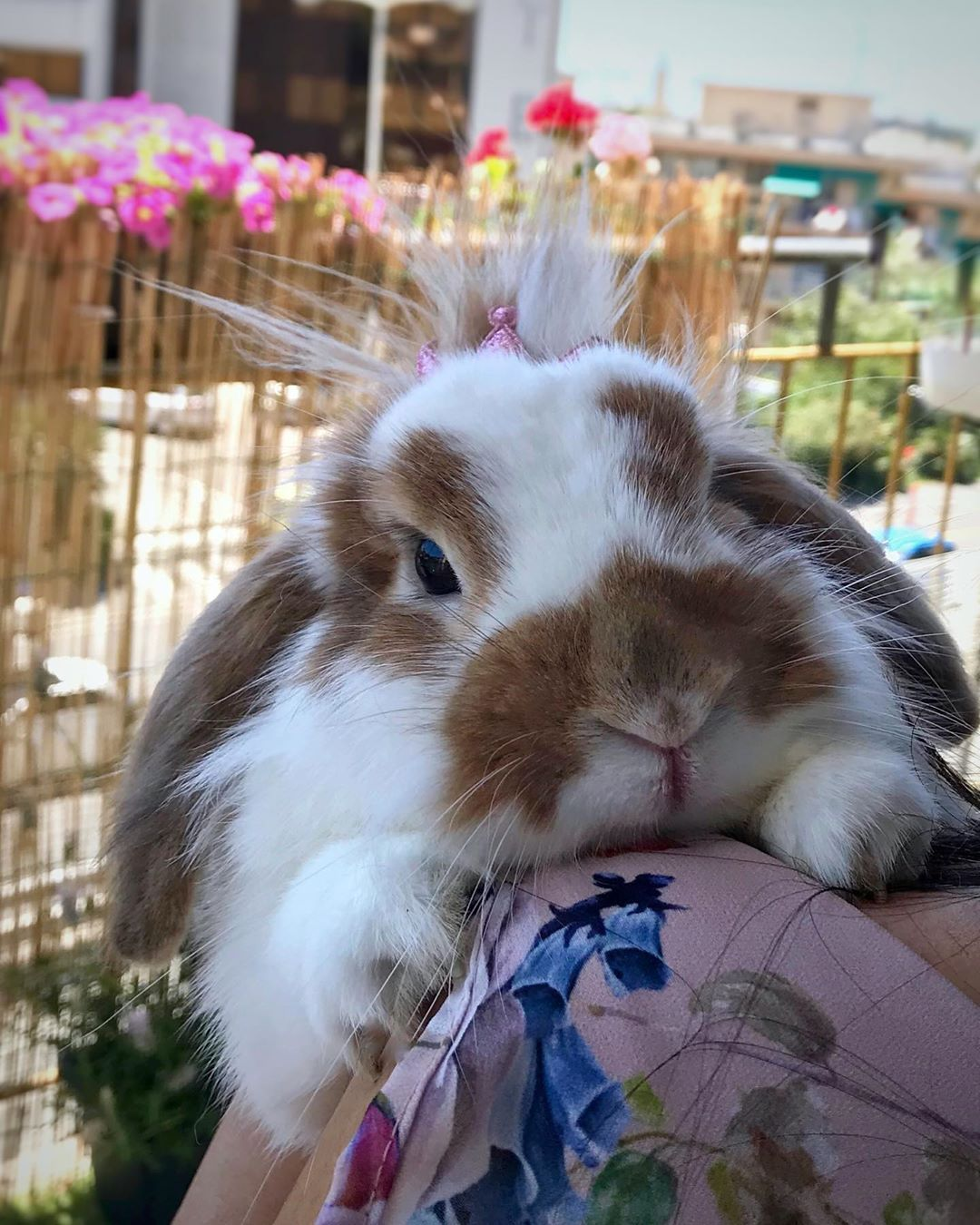 Chloe Tommy On Instagram The Most Beautiful Emotions Are The Ones That You Can Not Explain K In 2020 Cute Bunny Pictures Cute Baby Bunnies Cute Baby Animals