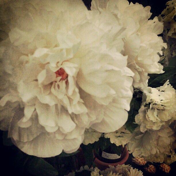 So pretty silkflowers hobbylobby httprusswholesaleflowers so pretty silkflowers hobbylobby httprusswholesaleflowers mightylinksfo