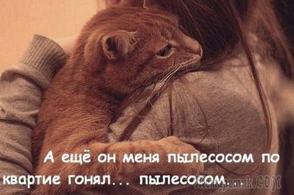 Идеи на тему «Прикольные коты» (31) | кот, кошки, кошачий сон