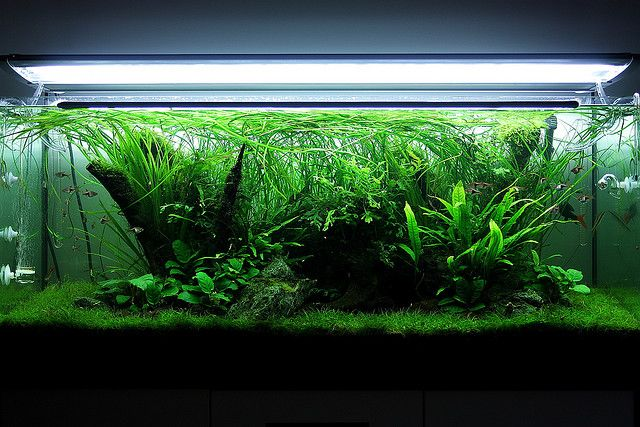 My 240l Nature Aquarium For The Home Nature Aquarium Aquarium
