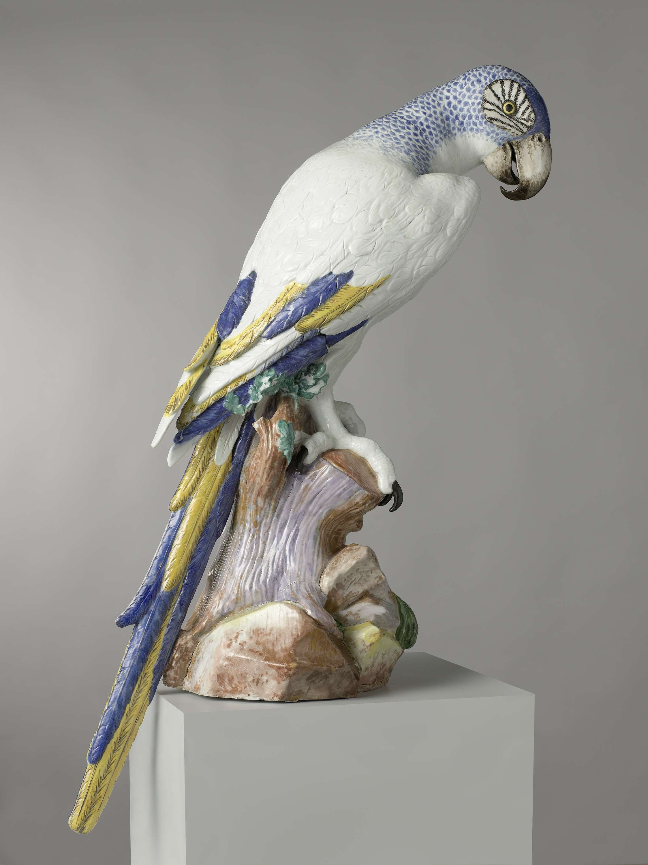 Blauwe ara, Meissener Porzellan Manufaktur, 1731