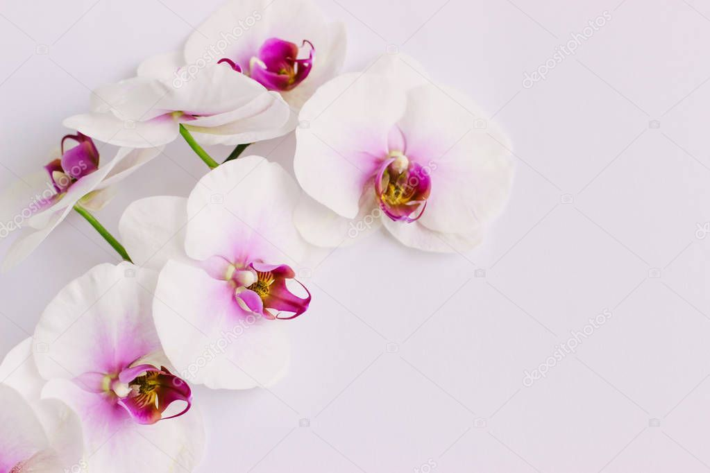 White Flowers Orchid On Pink Background Stock Photo Aff Orchid Flowers White Pink Ad Pink Orchids White Flowers Pink Background