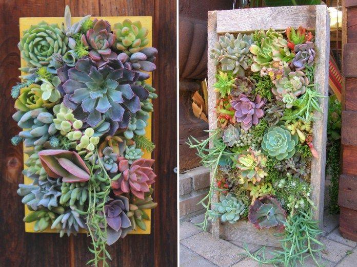fabriquer un tableau de plantes grasses et succulentes plantes grasses tableau de et plantes. Black Bedroom Furniture Sets. Home Design Ideas