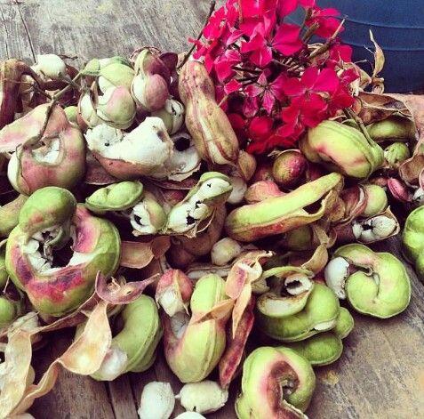 Guamuchiles | fruits and vegetables | Pinterest  Guamuchiles