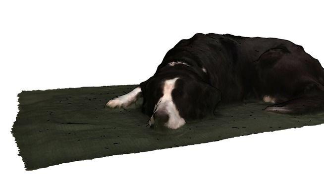 Modelo 3D recente de dog