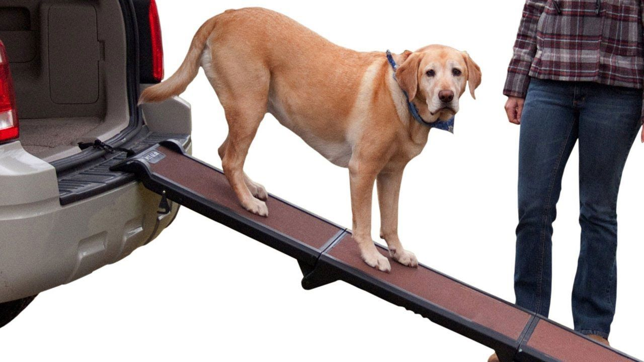 Top 5 Best Cheap Dog Ramp Dog Car Ramps Best Prices Best