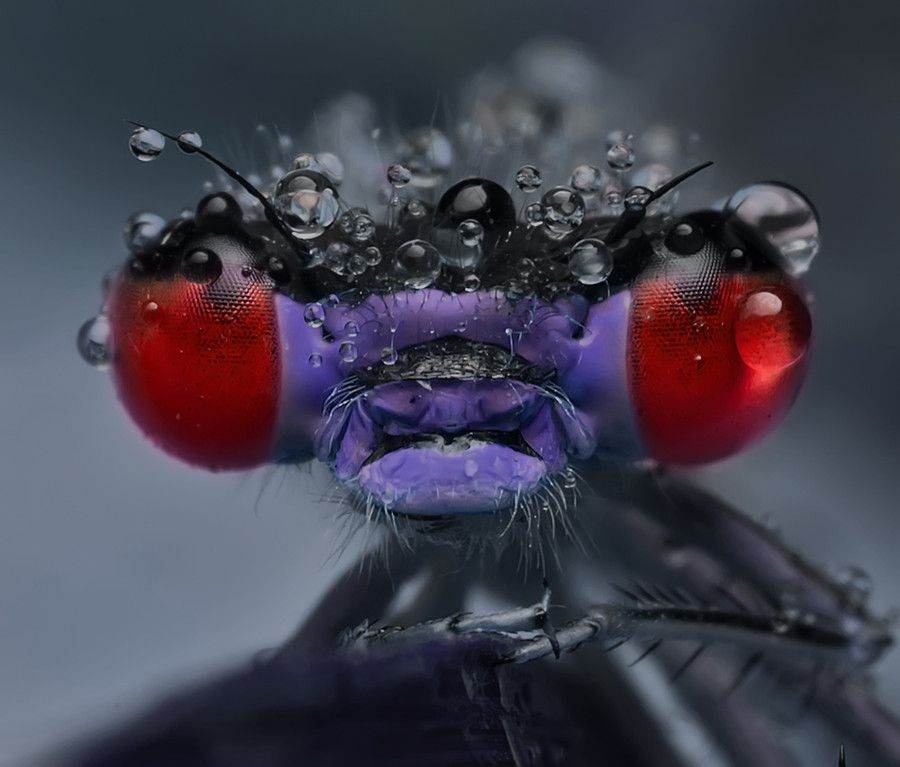 Amazing Colorful Chamilions: Amazing Colors. Golzar's Photos Are Both Creepy And