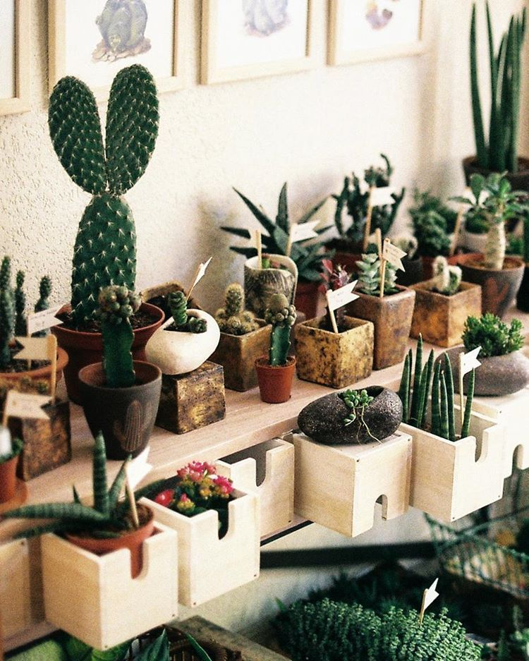 Pin by Jeremy Dufner on Indoor Greenery Plants, Cacti