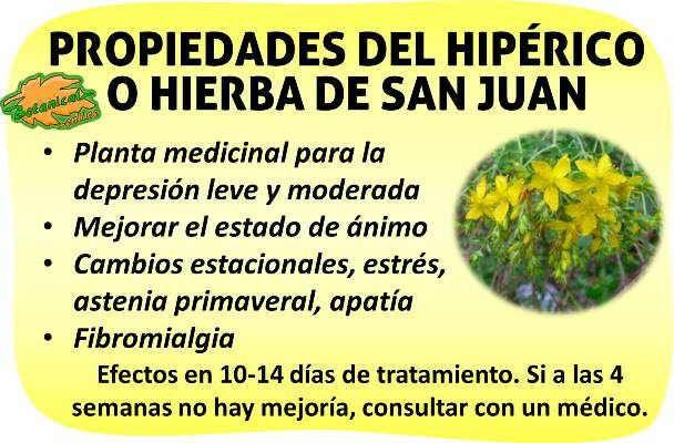 Propiedades hiperico o hierba de san juan para la for Planta decorativa propiedades medicinales
