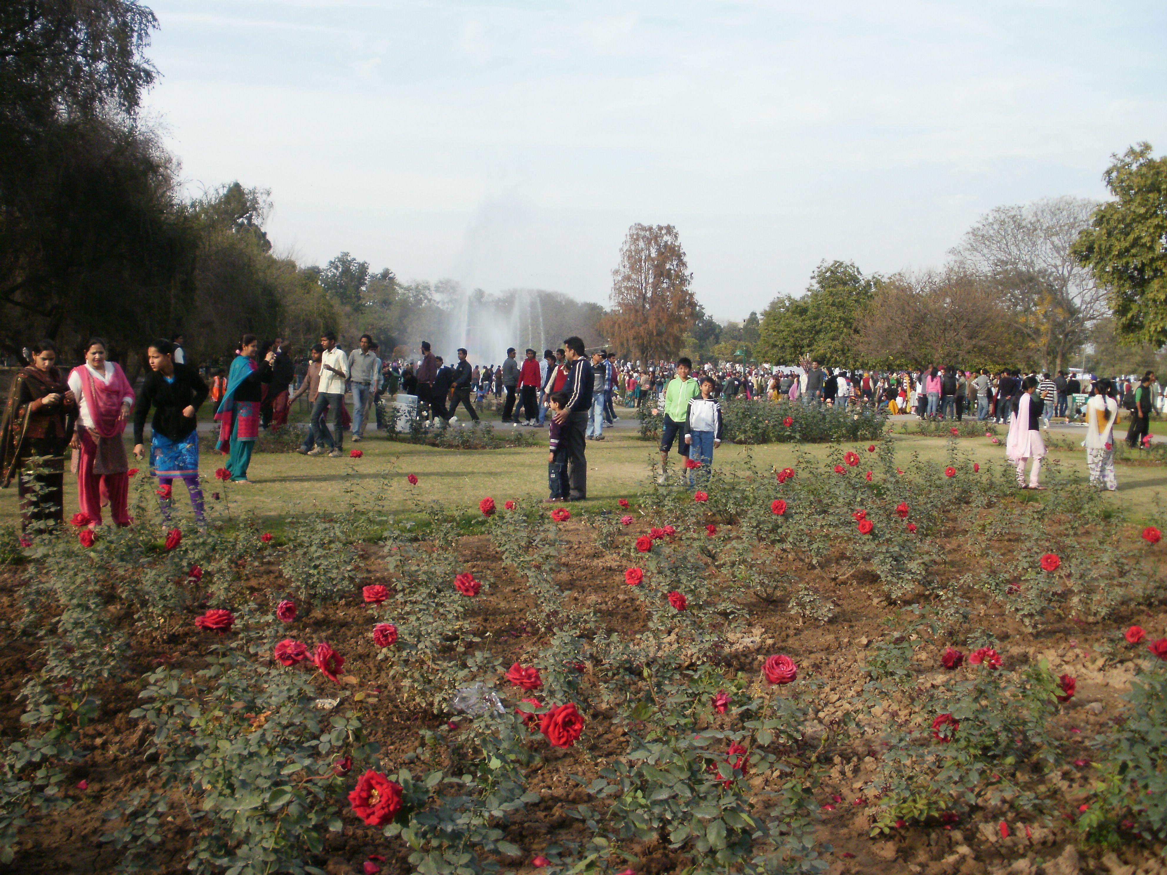 Rose Garden, Chandigarh during the Rose Festival, February each year ...
