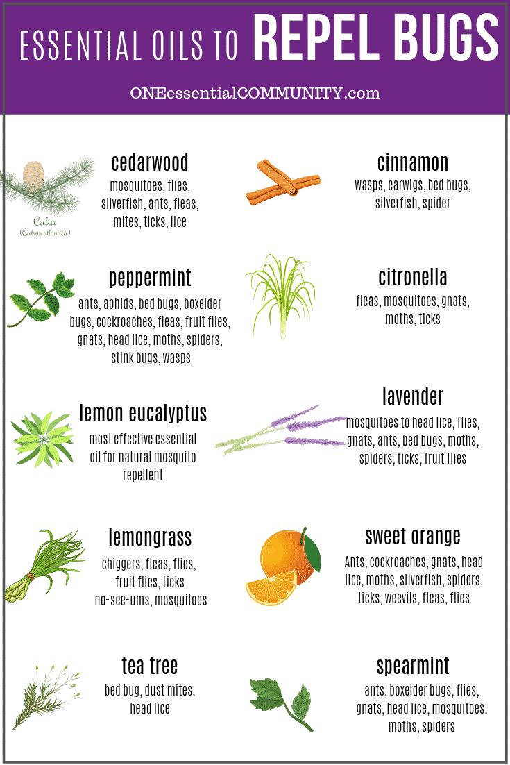 Top 10 Essential Oils That Repel Bugs Bug Spray Recipe Diffuser
