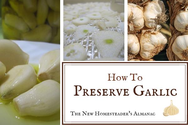 How To Preserve Garlic Preserving garlic, Garlic, Garlic