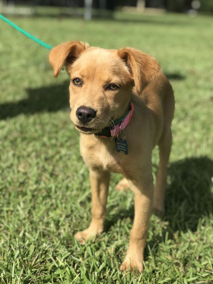 Adopt Lady on Rescue dogs, Adoption, Pet adoption