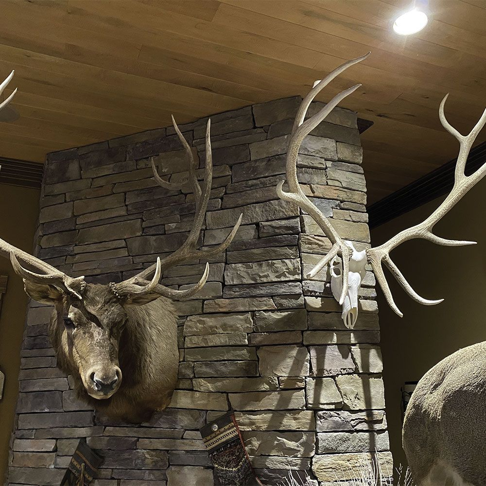 Pin on Shed Antler Ideas