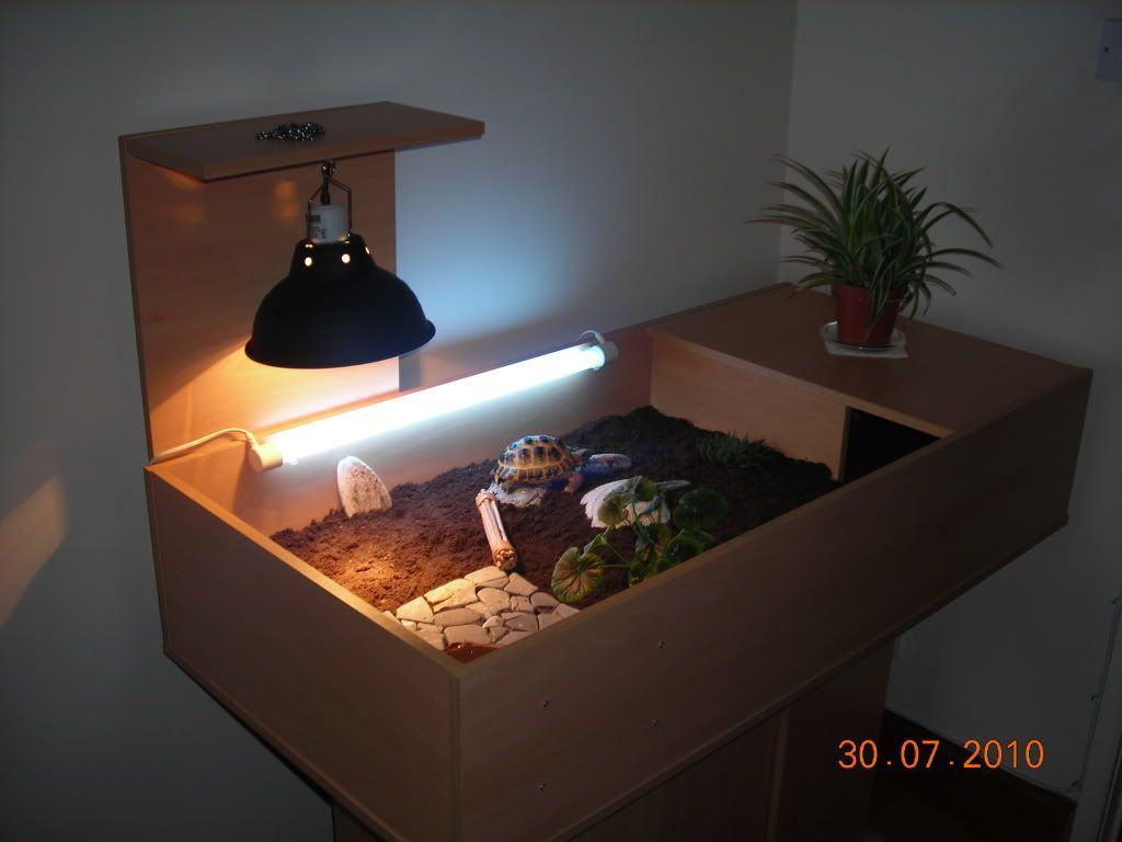 tortoise cages and enclosures | Basking bulb for horsfield ...