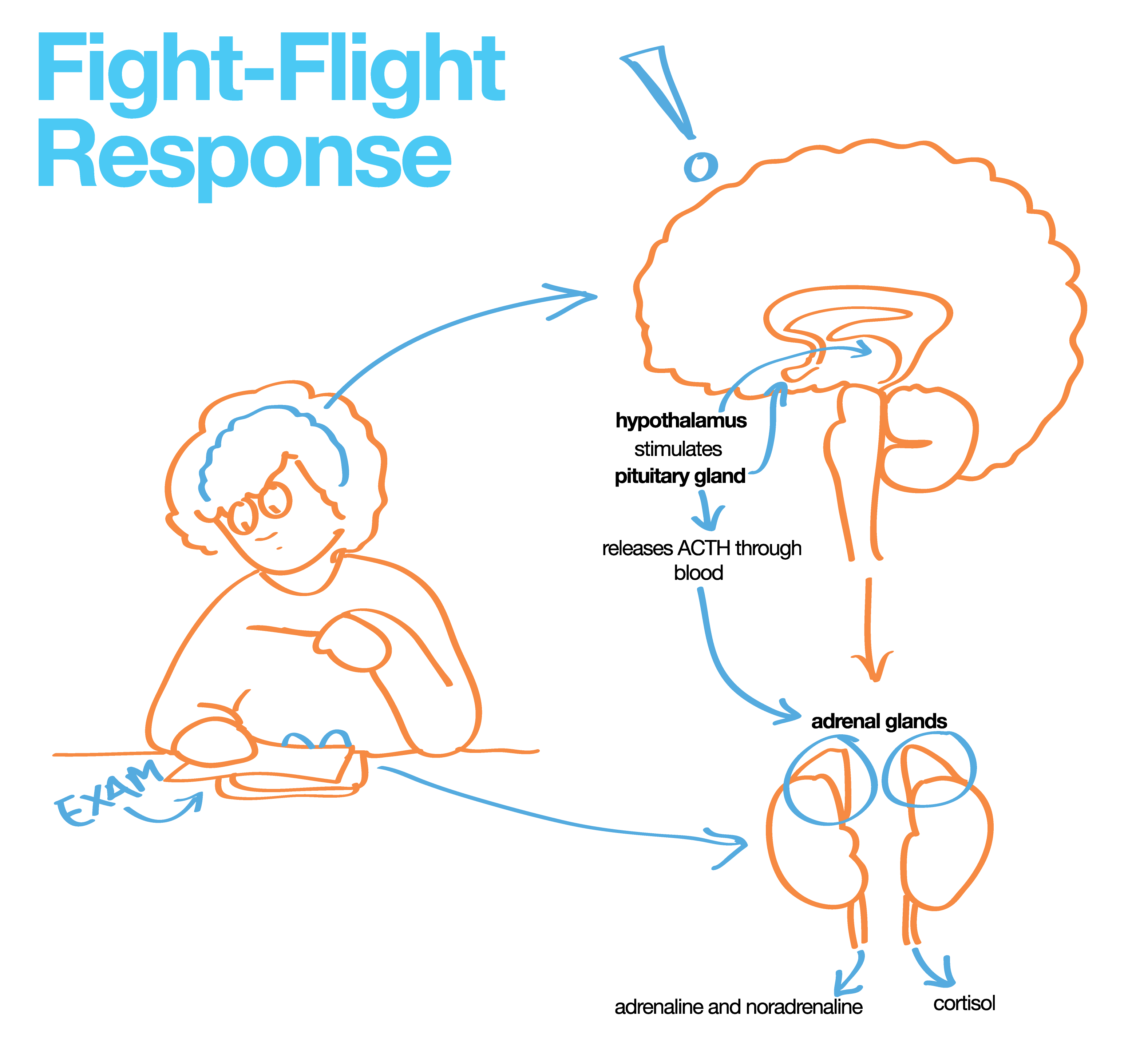 the fight and flight reaction The fight-or-flight response is a physiological reaction that either prepares our  bodies to stay and fight or to flee learn how this response.